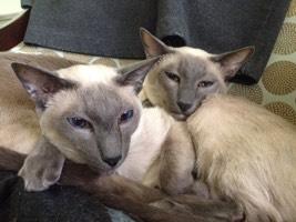 Barky Cat Bros