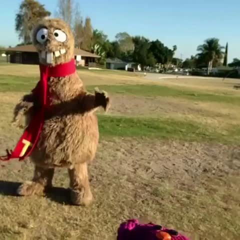 #tb 2 wen me and Tooba (Goon Holler) did the boney maroney in a California park. #corduroycatdance #CCandFriends #ripvine 💚