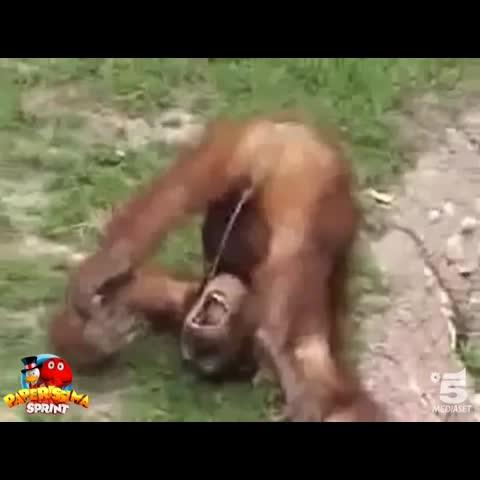 porno-roliki-na-video-smotret-onlayn