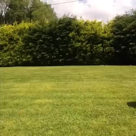 vine by Tadhg Fleming