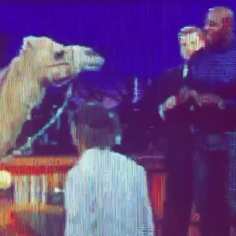 #terrycrews #backup n #Wine for a #onedance w/a #camel #drake do that- #throwbackvine #musicedit #jamescorden #2017