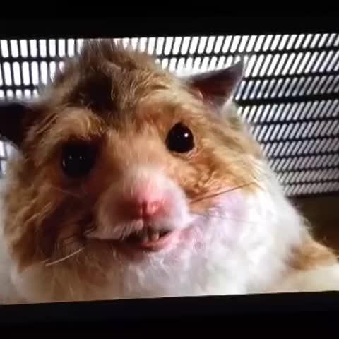 #nuttyprofessor #nuttyprofessor2theklumps #eddiemurphy #now #was #the #supposed #to #happen #im #not #that #kind #of #nasty #hamster