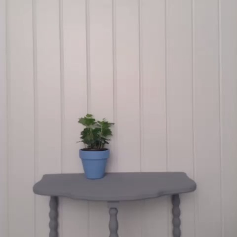 vine by Lowes
