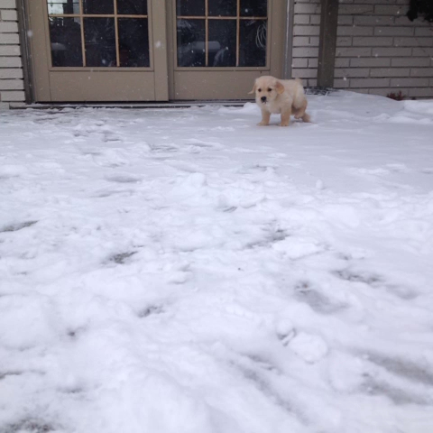 First time in snow
