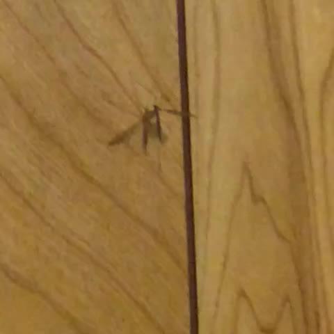 Image of zika from Vine