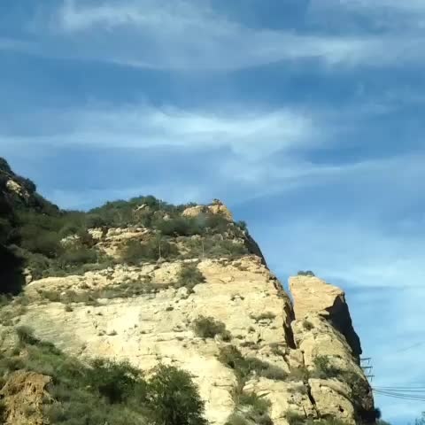vine by Emily Osment