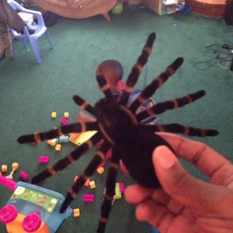 SpiderCam!!! vine