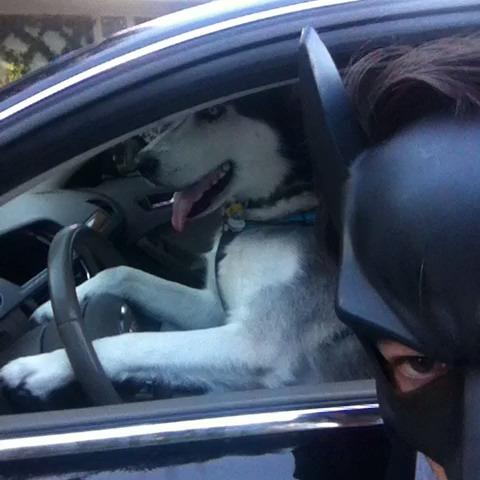 Batdog - BatDad #batdad vine