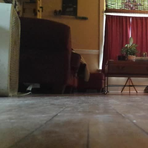 Running in for a selfie like.. #funny #ferret  #ferretlife