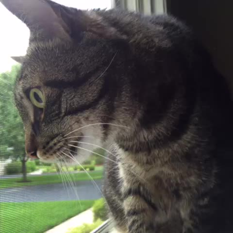 #tiger #turtle #funny #mybuddy #catvine #cat #catsofvine #pets