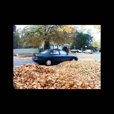 vine by NumberOneVines