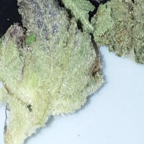 Tht exclusive #MarijuanaVines #thatLoudTho #weedvine #Happy420 #hightimesmagazine