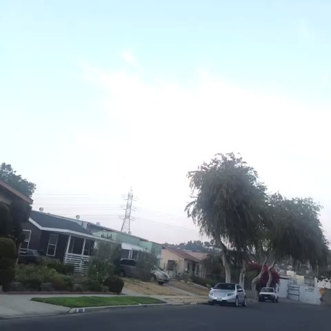 vine by Karla Lane