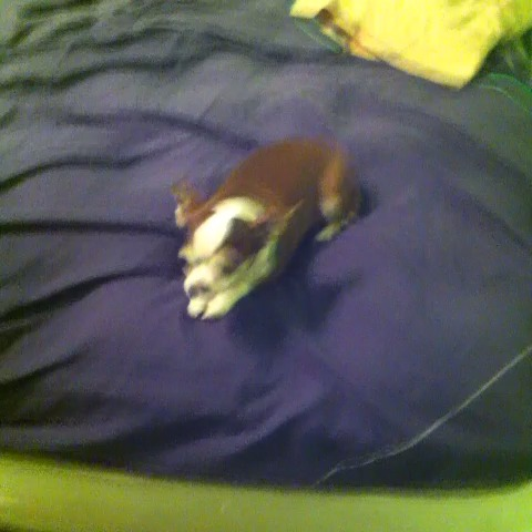I love my dog ;) vine