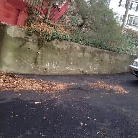 vine by Keelayjams
