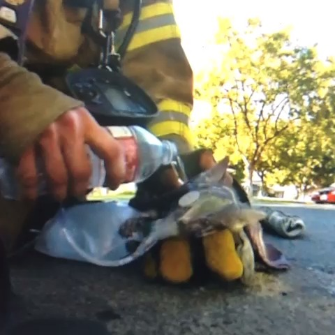 Firefighter Saves Kitten's Life. Just awesome ❤ vine