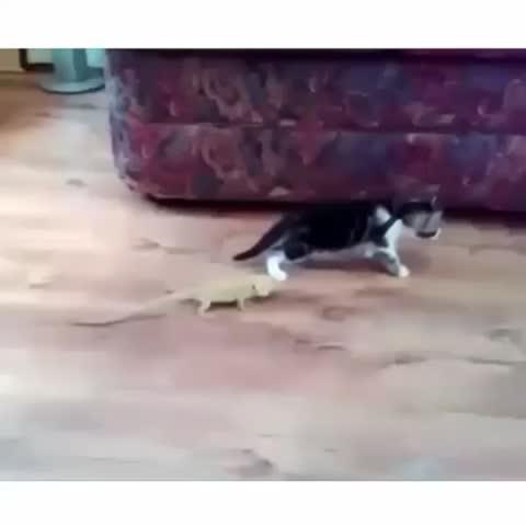 #omfg #lmfao #funny #cats #scared #VineFail #EpicFail #loop