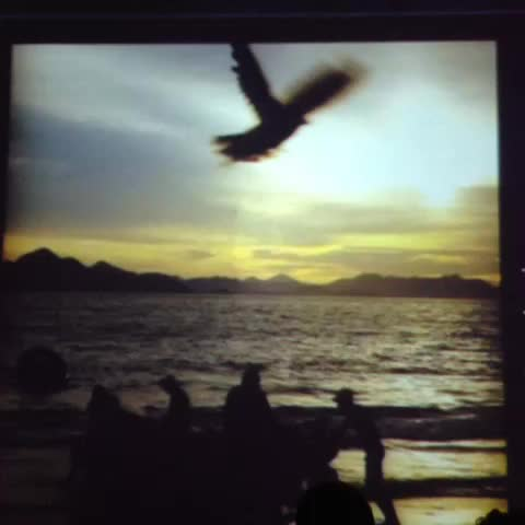 Algumas fotos desse livro que mostra o quão lindo é o nosso Rio.... 😜🚀🌴🌅 Video Thumnbail
