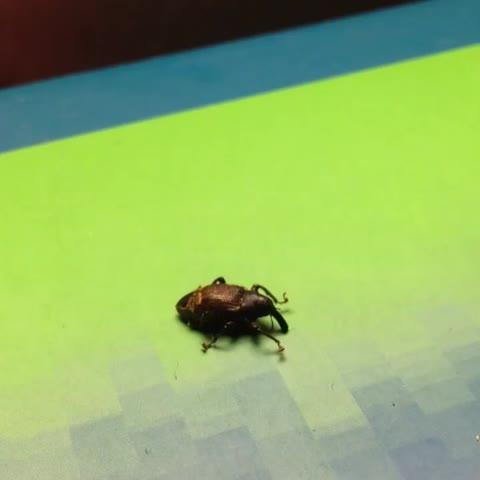 Vida de inseto. #vinetv #TheBestVines #vinebrasil   #CTvine #vinesptbr #bestevinesbr Video Thumnbail