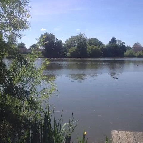 vine by Eleanor