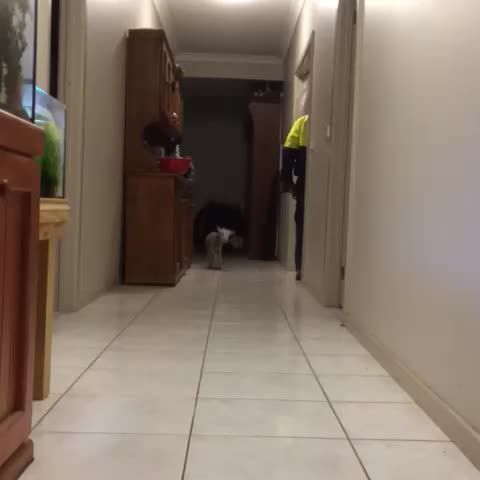 Lamb Hops Down The Hallway, Makes Everything Better In 6 Seconds