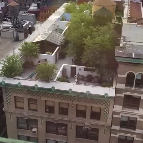 Vine by Jesse McLaren - NEW HOBBY: Turning neighbors into sims