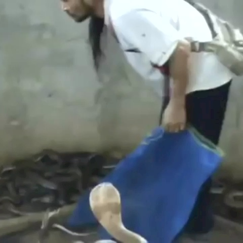 He slapped the shit out of that snake  #daaamn - Daaamns post on Vine