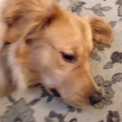 Vine by PuppyBF - When your parents want you to wake up early on the weekend