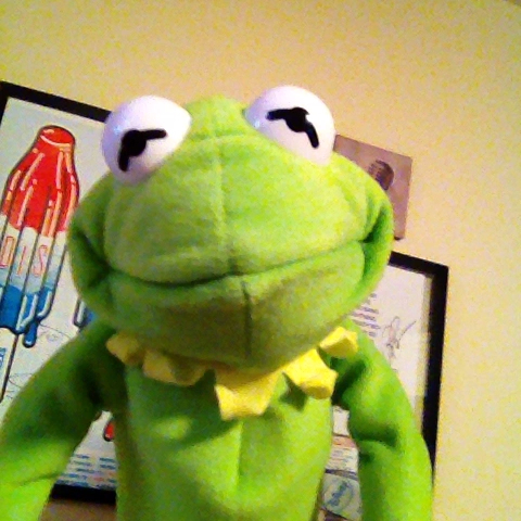 Image result for kermit selfie