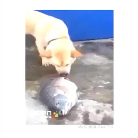 Indirectos post on Vine - Este vine me da mucha ternura. El perro tratando de ayudar a un pez 😢😢😢 - Indirectos post on Vine