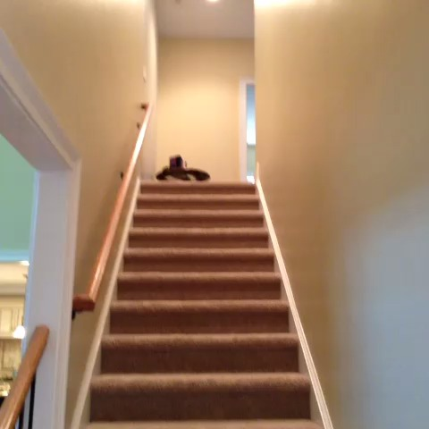 How thugs come down the stairs... - Nash Griers post on Vine
