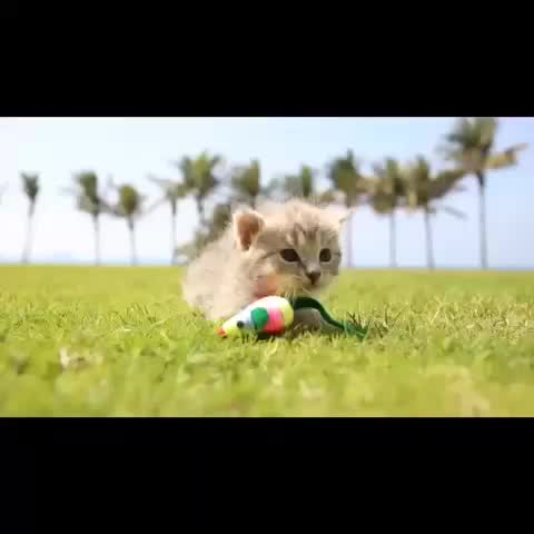 Vine by Ariana Grande - Cutest kitten Meow!! #kitten