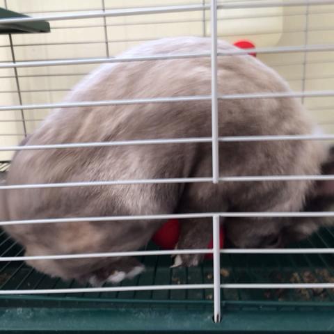 James Johns post on Vine - This bunny is horny as fuck! #howto #gtb #bunny Casey Jones,  Brian Piko - James Johns post on Vine