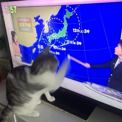 うだまs post on Vine - 猫 VS 天気予報士 最終決戦 - うだまs post on Vine