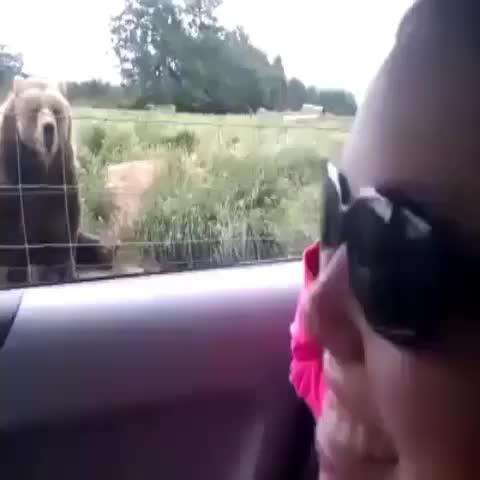 VineDeYoutubes post on Vine - #cute  #animal #hagamosvine #remake #momentoabsurder #funny #crazy #bruh #noviasbelike #venezuela #crazy #bruh #bear#madrid #lol #grizzly - VineDeYoutubes post on Vine