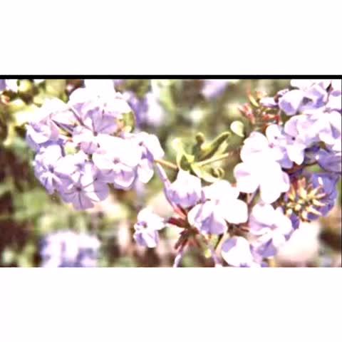 Vine by xRiarkleTown - by corey fogelmanis
