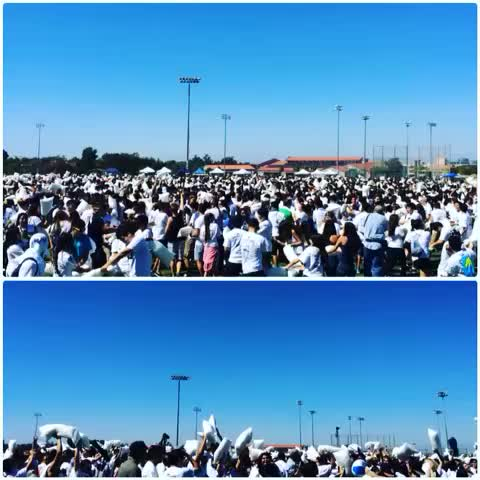 UC Irvines post on Vine - New Guinness World Record set for largest pillow fight with 4,200! Way to keep the UCI tradition! #UCIPillowFight #UCIPride - UC Irvines post on Vine