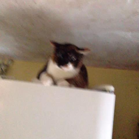 High fiver cat
