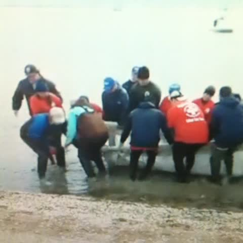 Manatee rescued near #Houston with a little help from his friends at ChambersWild.com . #KHOU - The Bishops post on Vine