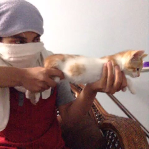 Farjads post on Vine - Cat gun. (No cats were harmed during the making of this video) - Farjads post on Vine