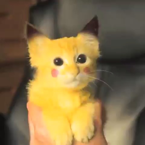 I have a Pikachu kitty!!!!
