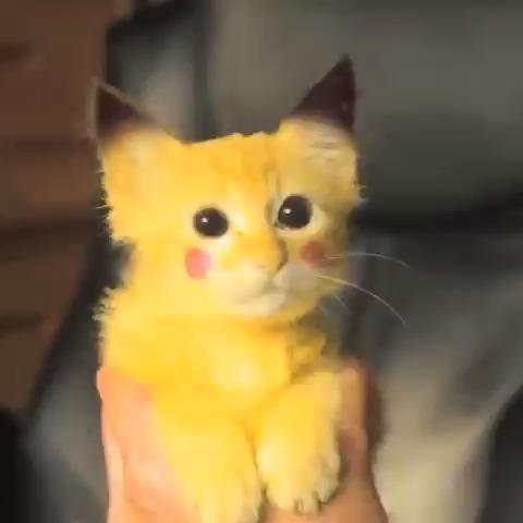 I have a Pikachu kitty!!!!