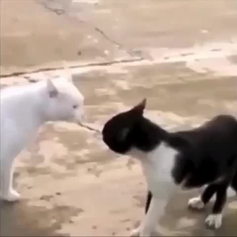 los gatos de mi puto barrio #cat #cats #putobarrio #thuglife #animals #chungo - Vine by Yisucrist - los gatos de mi puto barrio #cat #cats #putobarrio #thuglife #animals #chungo