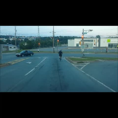 Vine by Leeland Lawson - He looked both ways though...