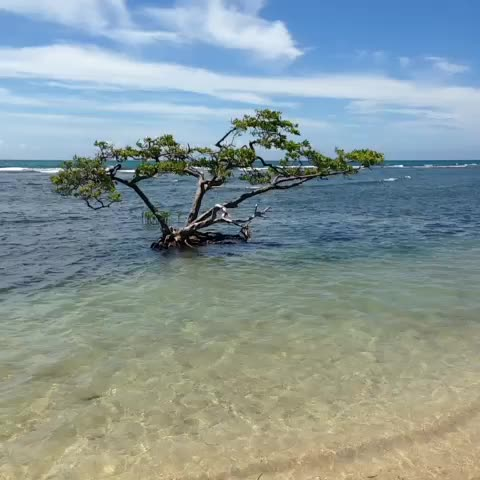 Watch Puerto Rico 39 S Vine Beauty And The Beach Puertorico