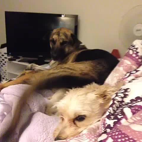 soy fan d este perro xdddd #dog #animals #wtf - Vine by Yisucrist - soy fan d este perro xdddd #dog #animals #wtf