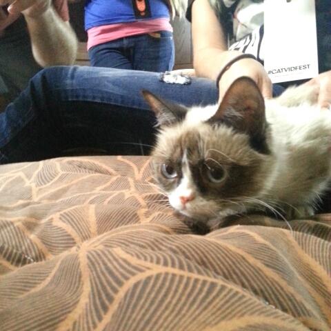 grumpy cat and lil bub finally meet up