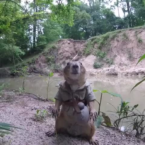 "Vine by Prairiedogpack - ""Posting this video of me in the outdoors so it looks like I adventure""-(b)In(g)diana Jones"