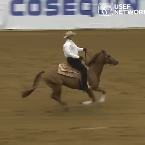 USEF Networks post on Vine - A selection of slide stops from the 2013 #KentuckyReining Cup. The 2014 version starts Friday. - USEF Networks post on Vine