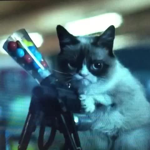 Grumpy Cat Gif Gun
